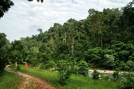 Am Fluss in Bukit Lawang